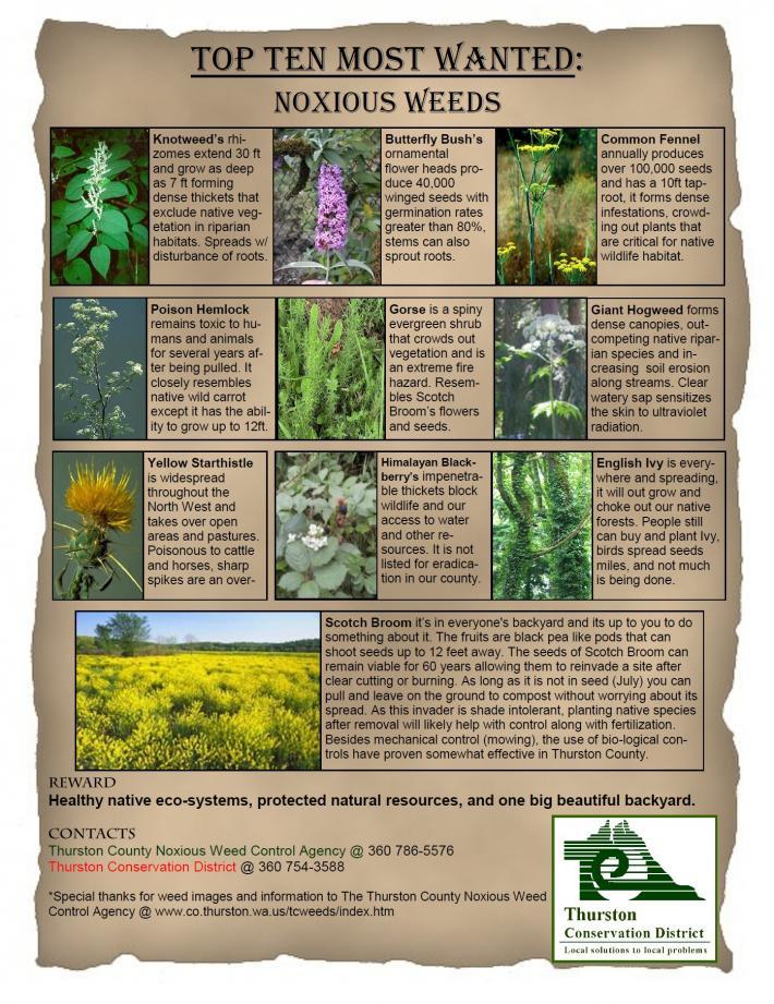 Top 10 Weeds-710x921